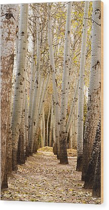 Wood Print featuring the photograph Golden Trees Dunhuang China by Sally Ross