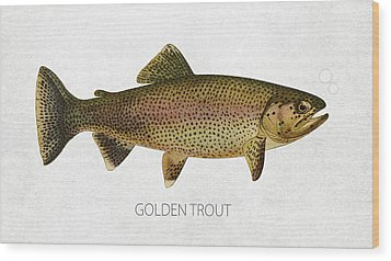 Golden Trout Wood Print by Aged Pixel