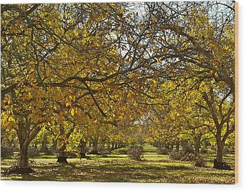 Golden Walnut Orchard Wood Print