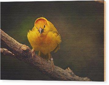 Golden Weaver Bird Wood Print