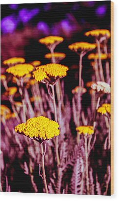 Golden Yarrow On A Blood Moon Night Wood Print by Dave Garner