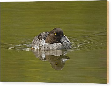 Goldeneye Wood Print by Paul Scoullar