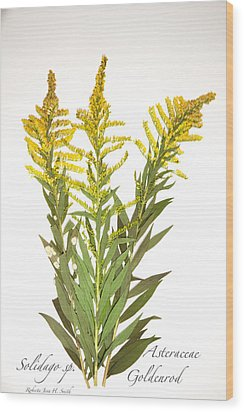 Goldenrod Wood Print