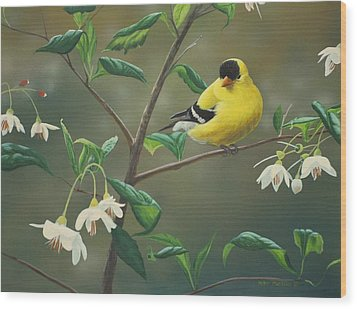 Goldfinch And Snowbells Wood Print by Peter Mathios