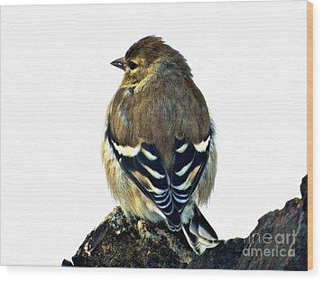Goldfinch At Sunrise Wood Print