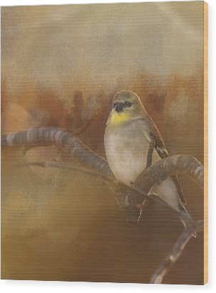 Resting Goldfinch Wood Print by Betty  Pauwels