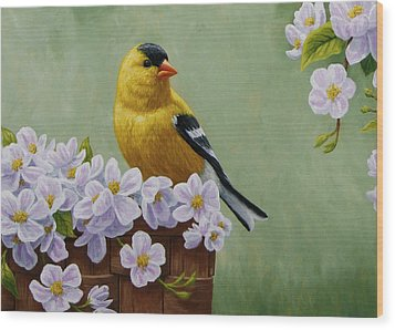 Goldfinch Blossoms Greeting Card 3 Wood Print by Crista Forest