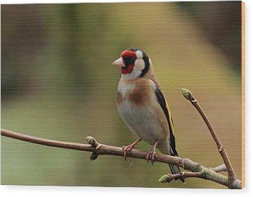Goldfinch Wood Print by Peter Skelton