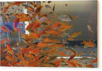 Goldfish Wood Print by Diane Lent