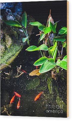 Wood Print featuring the photograph Goldfish In Pond by Silvia Ganora