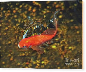 Goldfish Swimming Wood Print by Susan Wiedmann