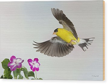 Wood Print featuring the photograph Goldie Confronting His Impatiens by Gerry Sibell
