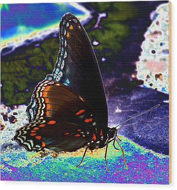 Gona-fly-butterfly Wood Print by Kim Pate