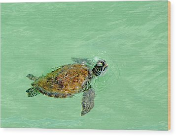 Wood Print featuring the photograph Good Day For A Swim  by Susan  McMenamin