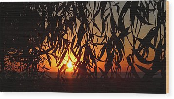 Good Morning Lake Michigan Wood Print