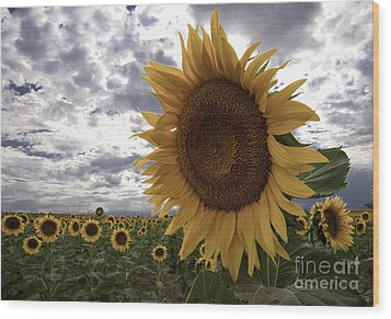 Wood Print featuring the photograph Good Morning Sunshine by Kristal Kraft