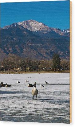Goose At The Peak Wood Print by Matt Radcliffe
