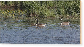 Wood Print featuring the photograph Goose Family In The Water by Leif Sohlman