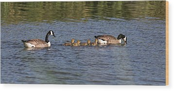 Wood Print featuring the photograph Goose Family by Leif Sohlman