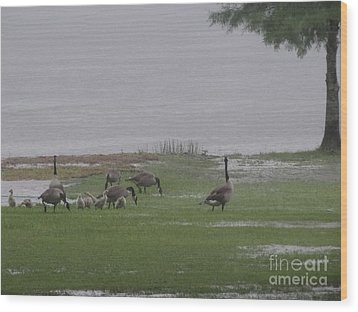 Goose Family Walk Wood Print by Joseph Baril