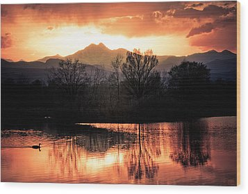 Goose On Golden Ponds 1 Wood Print by James BO  Insogna
