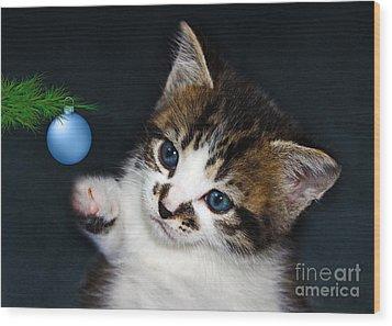 Gorgeous Christmas Kitten Wood Print by Terri Waters