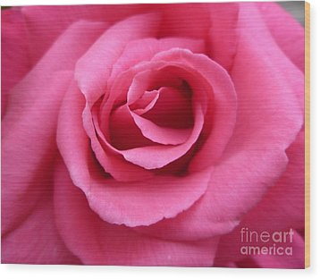Wood Print featuring the photograph Gorgeous Pink Rose by Vicki Spindler