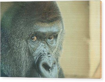 Gorilla's Look Wood Print by Adnan Elkamash