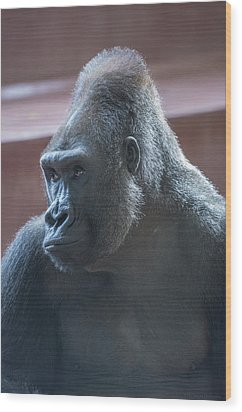 Gorilla Wood Print by Phil Abrams