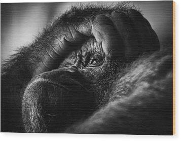 Wood Print featuring the photograph Gorilla Portrait by Chris Boulton