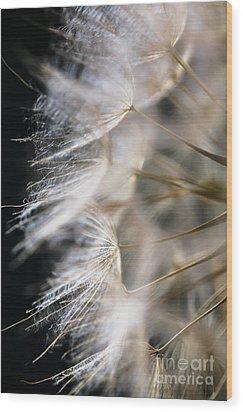 Gossamer Wood Print by Jan Bickerton