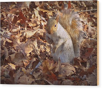 Wood Print featuring the photograph Got Nuts by Joseph Skompski