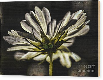 Wood Print featuring the photograph Got Your Back by Catherine Fenner