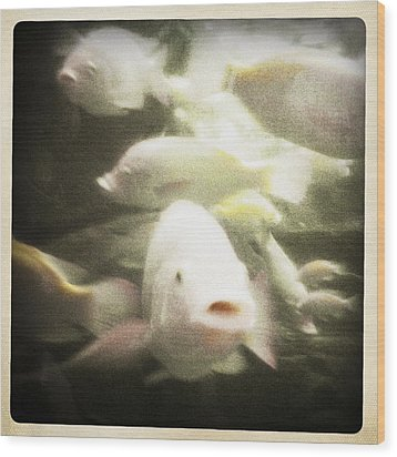 Wood Print featuring the photograph Gouramis by Bradley R Youngberg
