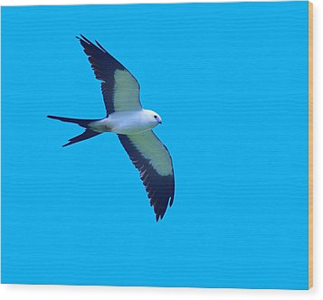 Grace And Majesty Wood Print by Tony Beck