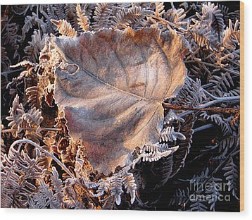 Graced By Frost Wood Print