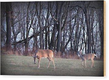Graceful Deers Wood Print by Jose Lopez