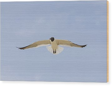 Wood Print featuring the photograph Graceful Gull by Bradley Clay