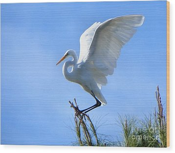 Wood Print featuring the photograph Graceful Landing by Deb Halloran