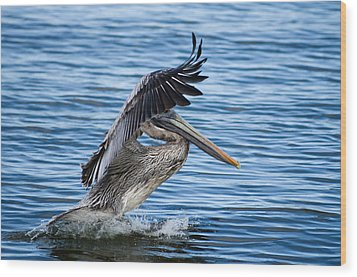 Wood Print featuring the photograph Graceful Landing by Gregg Southard