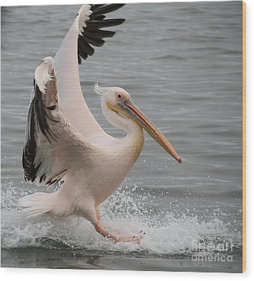 Graceful Landing Wood Print by Taschja Hattingh