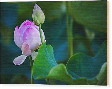 Graceful Lotus. Pamplemousses Botanical Garden. Mauritius Wood Print by Jenny Rainbow