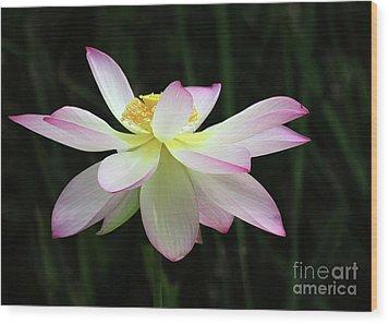 Graceful Lotus Wood Print
