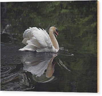 Graceful Swan Wood Print by Elsa Marie Santoro
