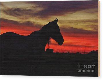 Gracie At Sunset Wood Print by Lynda Dawson-Youngclaus