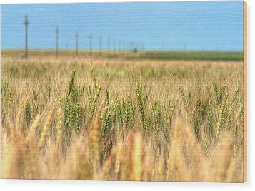 Grain Field - Hdr Photo Wood Print by Vlad Baciu