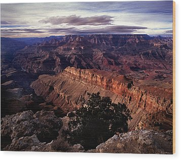 Grand Canyon Golden Ridgeback Wood Print