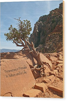 Wood Print featuring the photograph Grand Canyon Survivor by Kathleen Scanlan