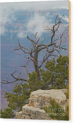 Wood Print featuring the photograph Grand Canyon Tree by Rod Wiens