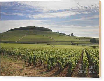 Grand Cru And Premier Cru Vineyards Of Aloxe Corton. Cote De Beaune. Burgundy. Wood Print by Bernard Jaubert